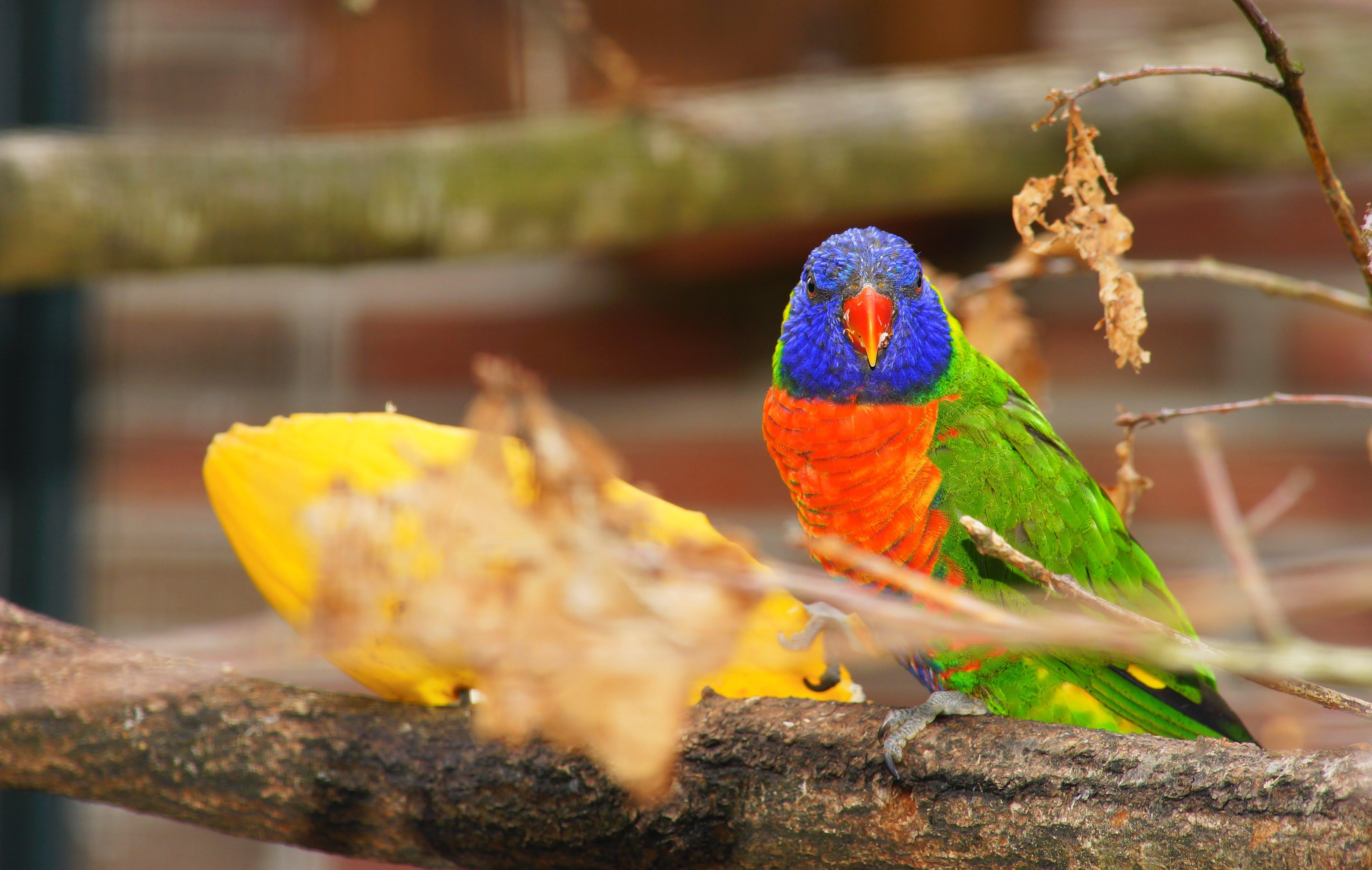 Green, Orange, and Purple Bird