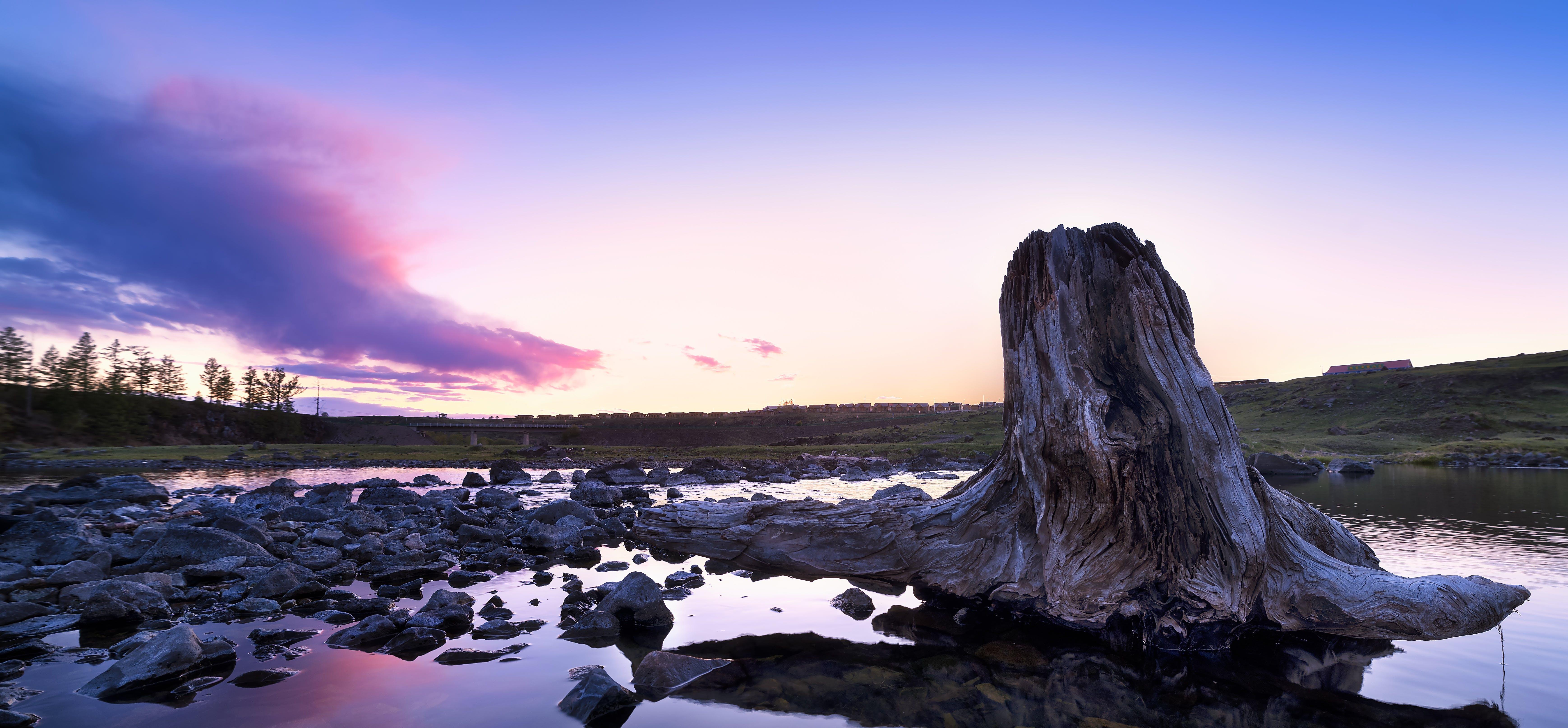 Tree Stump on Body of Water