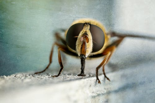 Macro of bright carnivorous insect with thin legs and proboscis sitting on wooden surface in daylight
