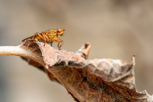 Predatory insect resting on faded leaf in summer
