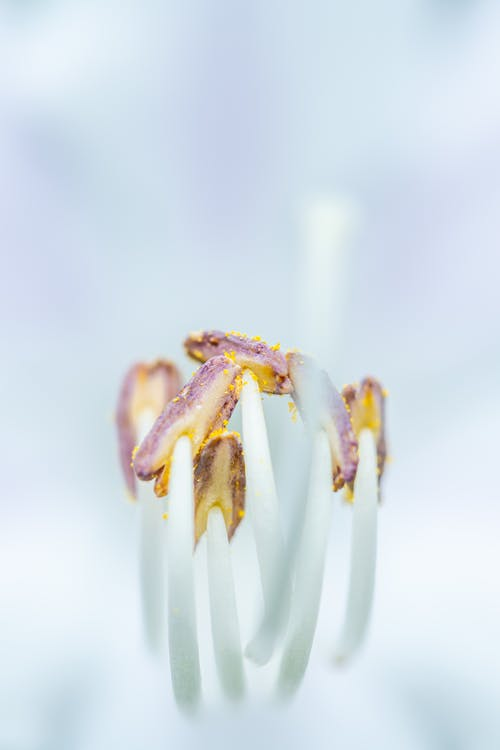 Thin stamens of bright blooming flower in daylight