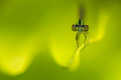 Small dragonfly on green plant petal