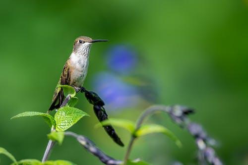 Attentive hummingbird sitting on lush plant stem