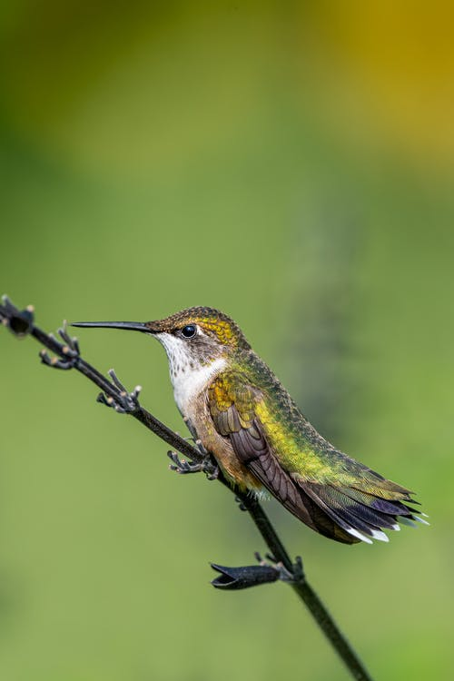 Small hummingbird with long beak and bright plumage sitting on plant stem in wild nature on clear day