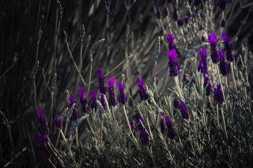 Ilmainen kuvapankkikuva tunnisteilla aurinko, heinäpelto, kasvikunta, kasvit
