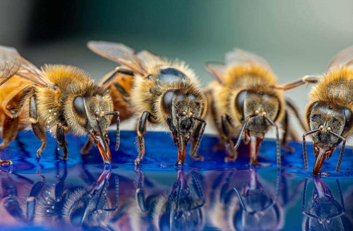Do bumblebee sting