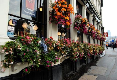 Free stock photo of city-challenge, flowers
