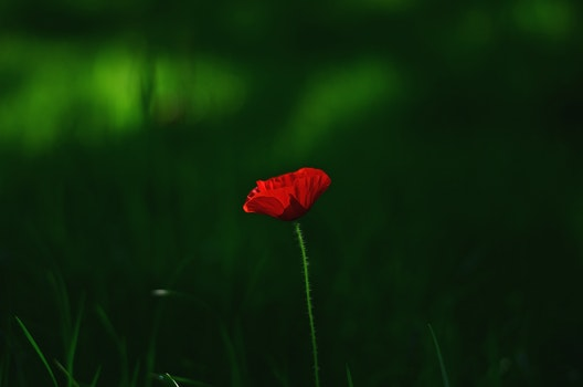 Royalty free images of dawn, nature, red, field