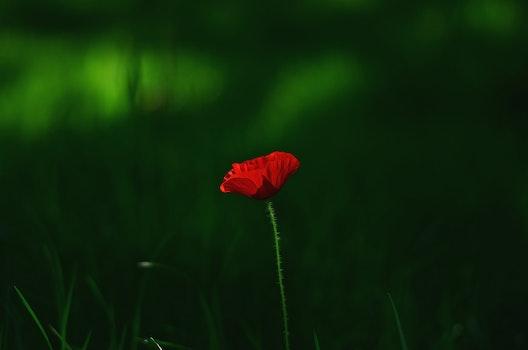 Kostenloses Stock Foto zu dämmerung, natur, rot, feld