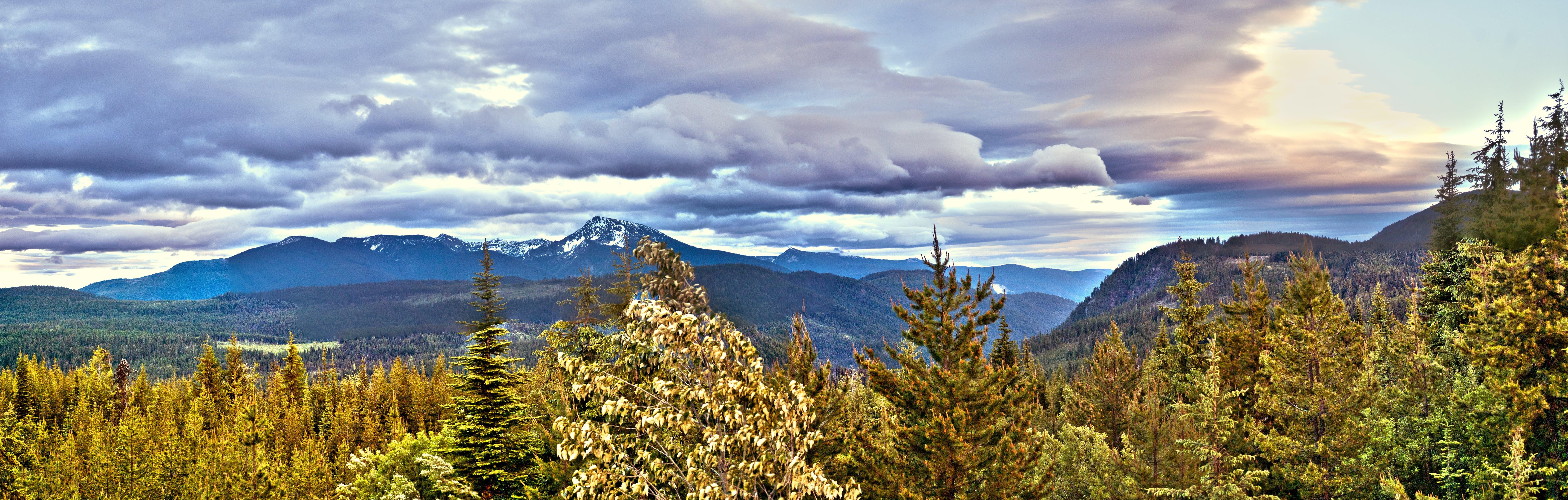 Trees on Mountain Terrain