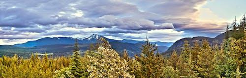 Δωρεάν στοκ φωτογραφιών με βουνά, βουνοκορφή, δασικός, δέντρα