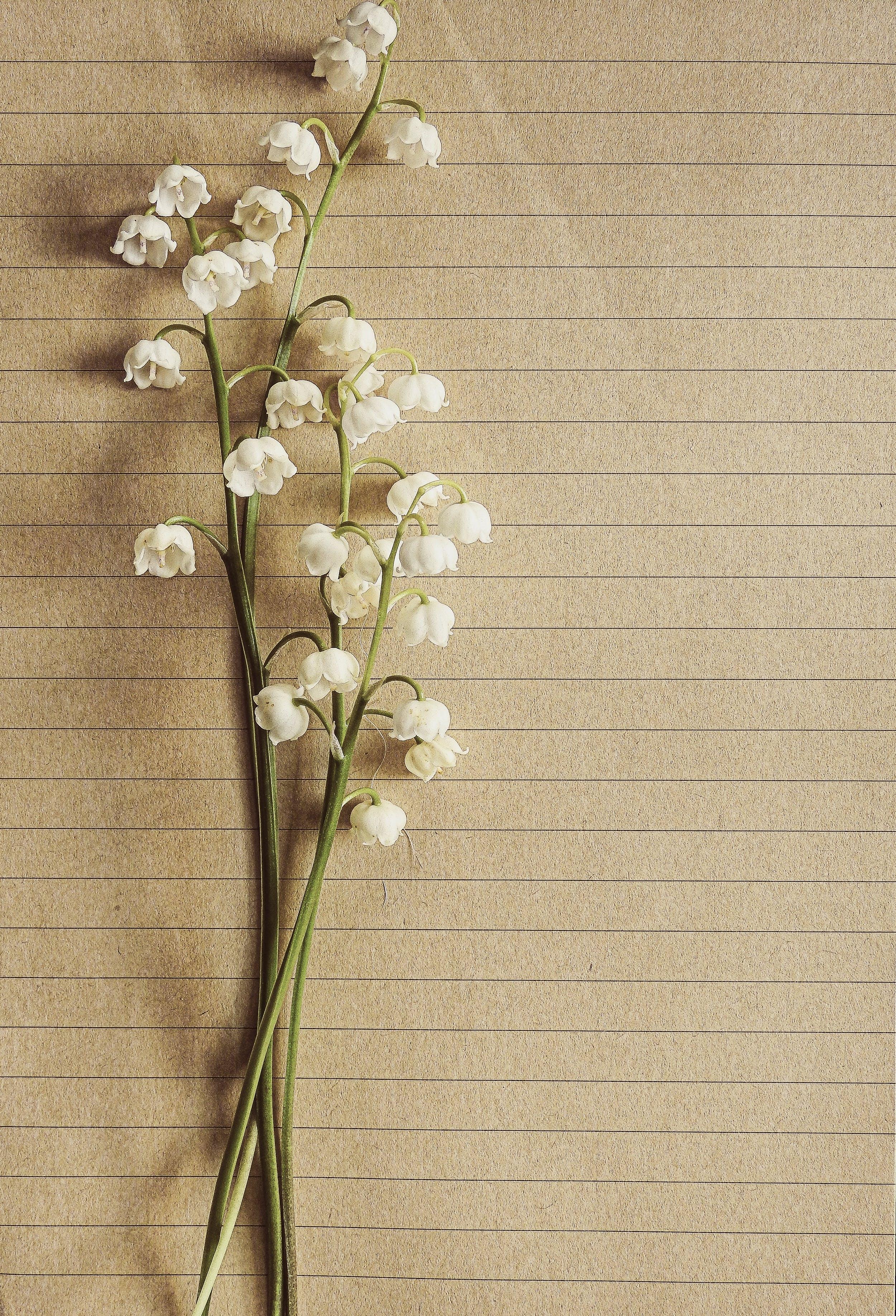 bakgrund, blomma, blommor