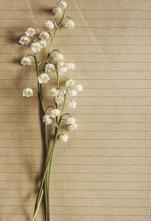 achtergrond, bloeien, bloeiend