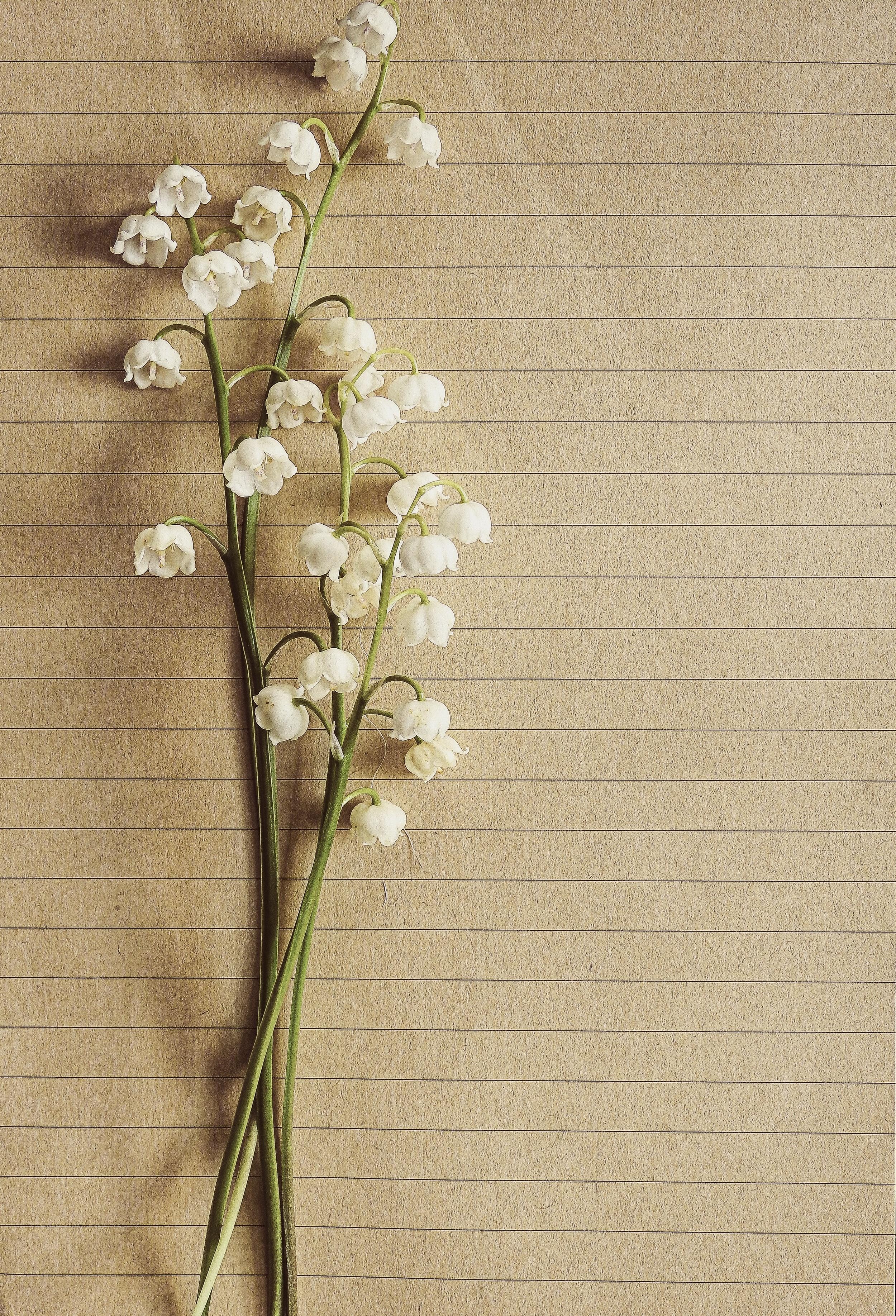 White Petaled Flower On Brown Trunks 183 Free Stock Photo
