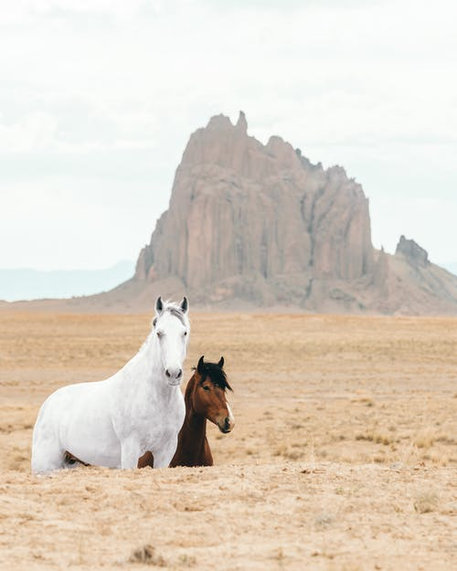 White and Brown Horses on Brown Field