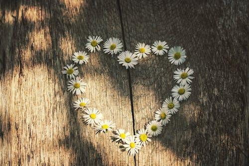 Gratis arkivbilde med blomster, design, flora, hjerte