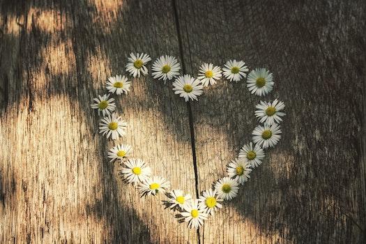 Free stock photo of wood, art, heart, flowers