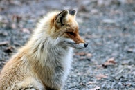 animal, cute, blur