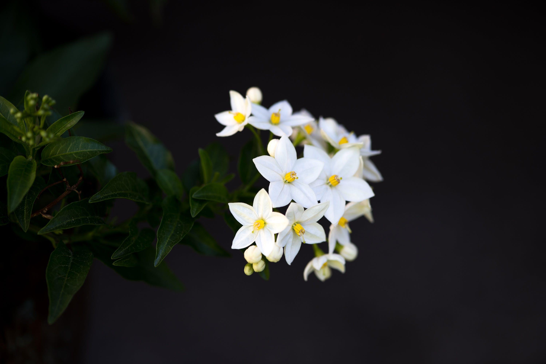 Free stock photo of bloom, blossom, close, dark background