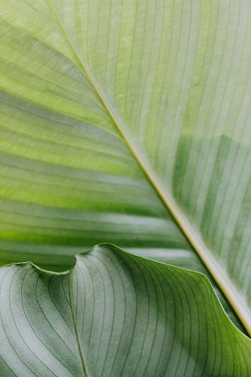 Бесплатное стоковое фото с ботанический, зеленый, крупный план