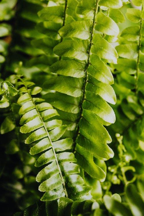 Foto stok gratis dari dekat, dasar, daun, Daun-daun