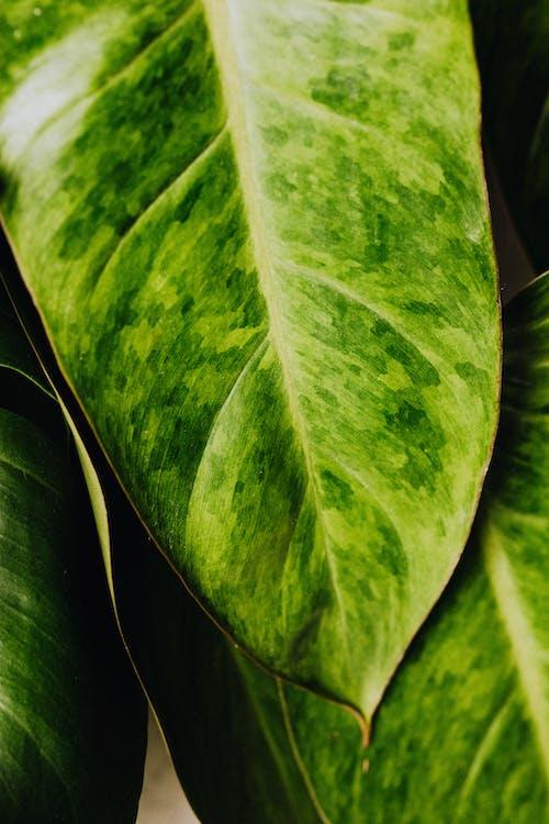 壁紙, 宏觀, 室內植物, 廠 的 免費圖庫相片