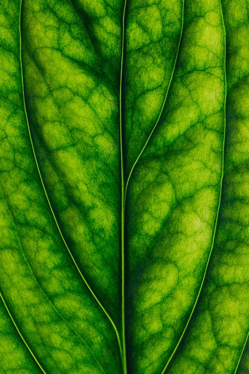Macro Photography of a Leaf