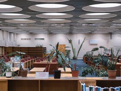 Contemporary interior of library with assorted houseplants