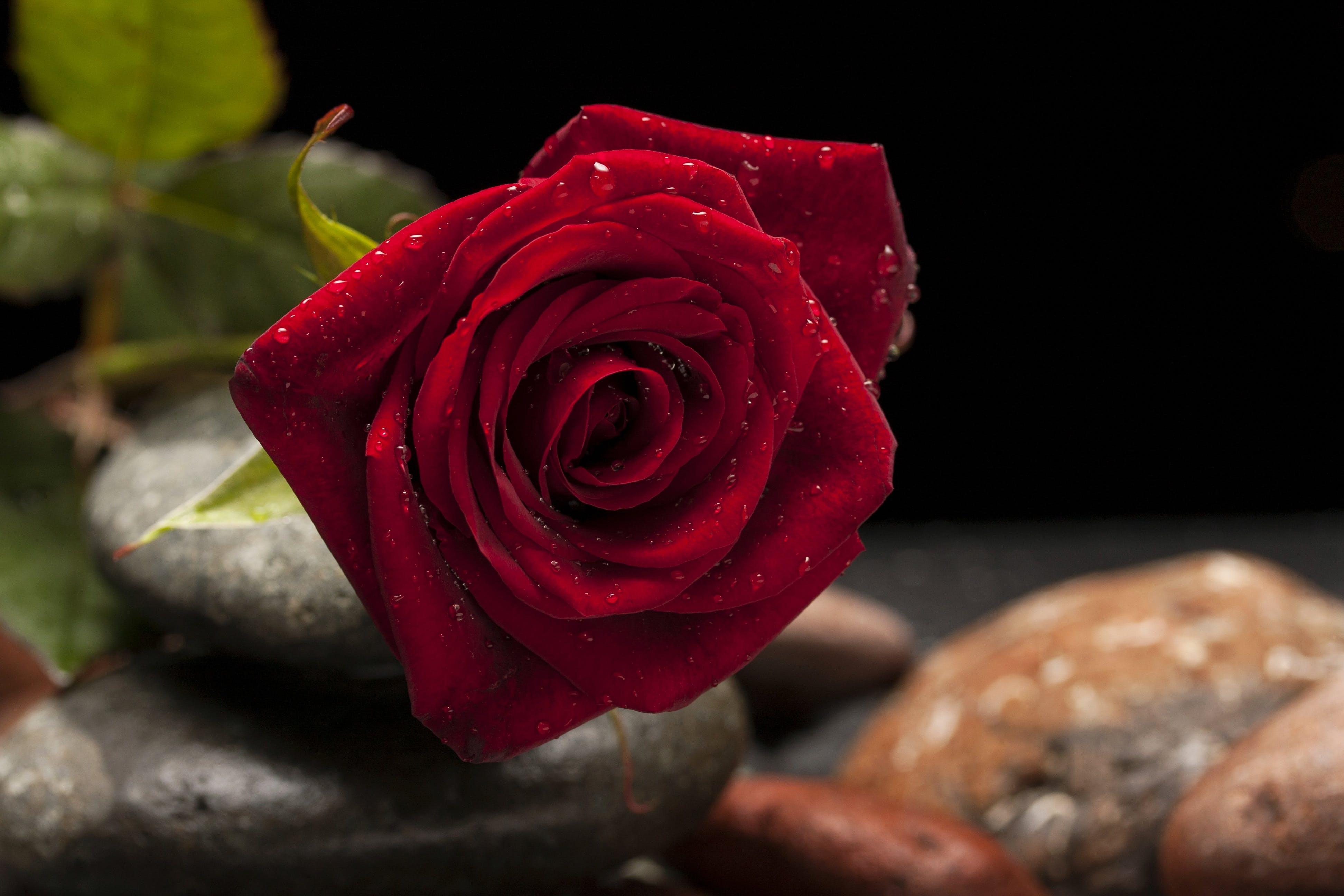 Gratis arkivbilde med blomst, blomsterblad, blomstre, delikat