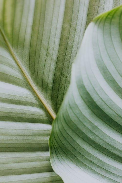 Бесплатное стоковое фото с ботанический, крупный план, линии