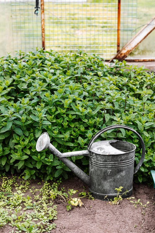 Black Watering Can on Green Plants