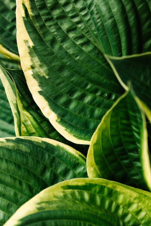 Бесплатное стоковое фото с ботанический, завод, крупный план