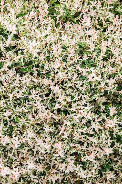 Бесплатное стоковое фото с ботанический, завод, листья