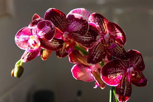 Foto d'estoc gratuïta de botànic, concentrar-se, delicat, desenfocament