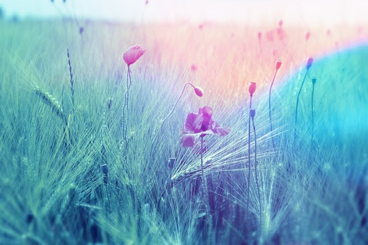 Free stock photo of landscape, nature, field, flowers