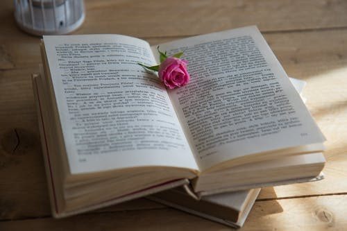 Pink Flower on Opened Book