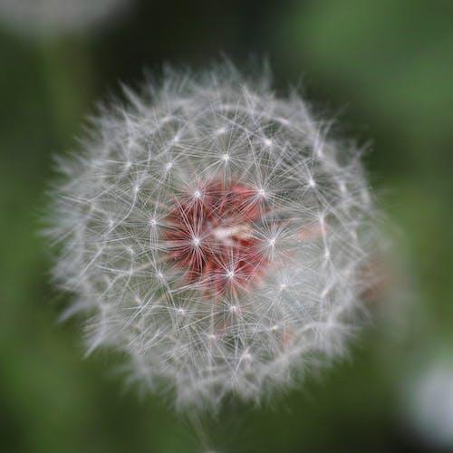 Gratis stockfoto met bloeien, bloeiend, bloemen, bloesem