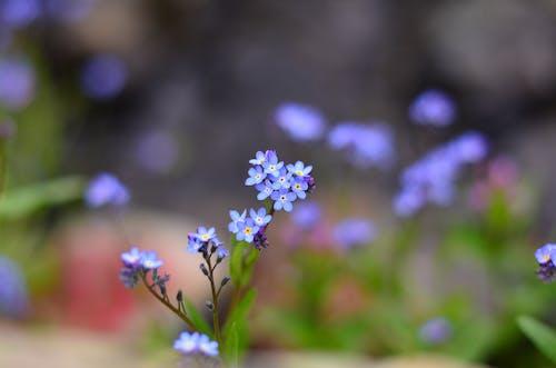Imagine de stoc gratuită din adâncime de câmp, albastru, anotimp, botanic