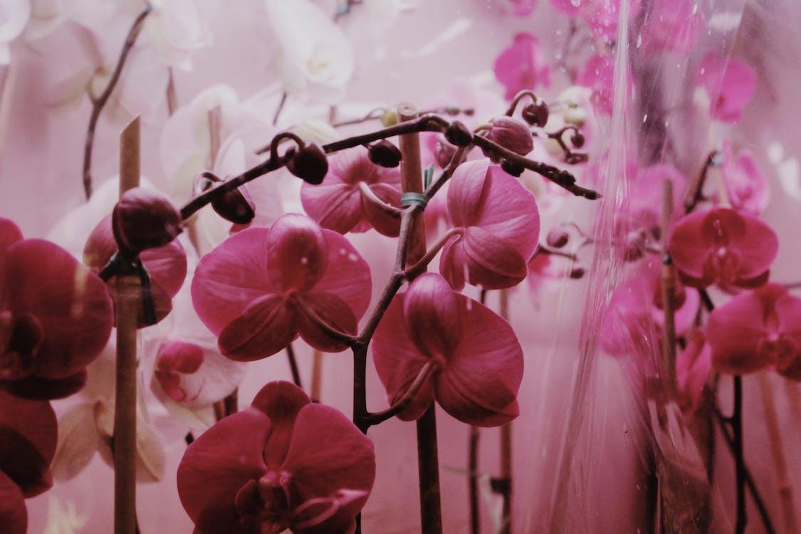 Kostenloses Stock Foto zu aroma, blühen, blume
