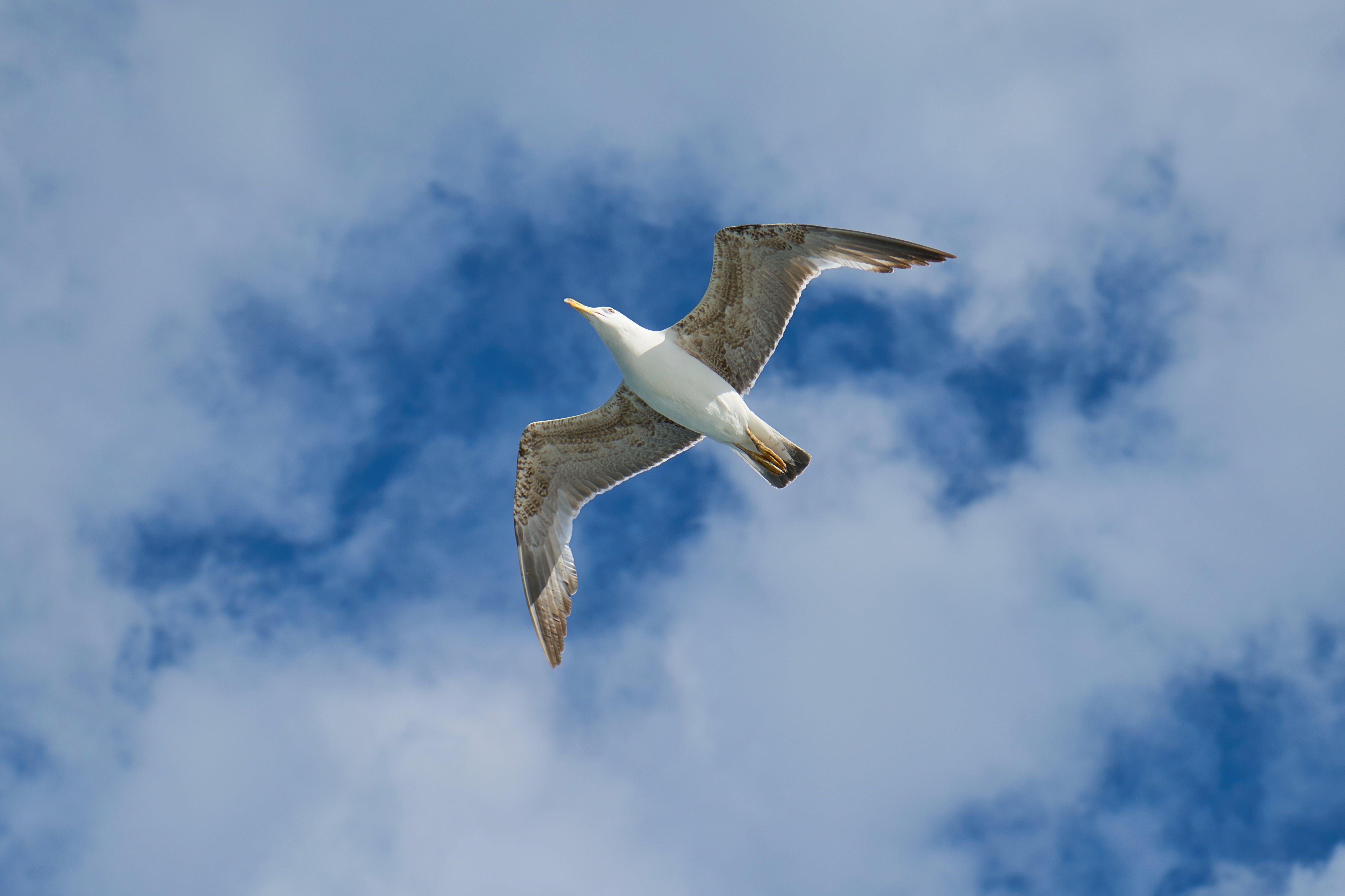 경치, 구름, 날개, 날으는의 무료 스톡 사진