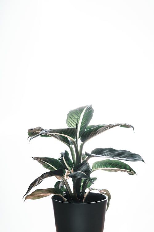 Photos gratuites de art, botanique, brillant