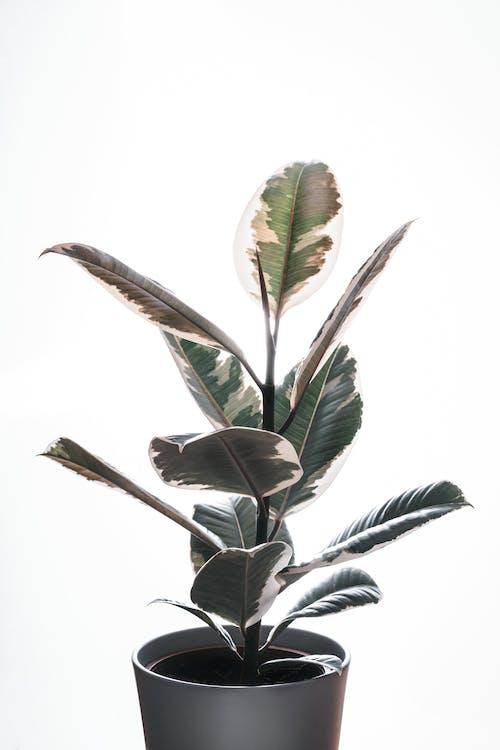 Photos gratuites de arbre, art, botanique