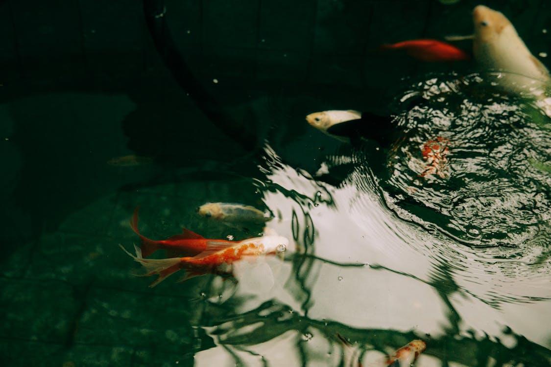 Fotos de stock gratuitas de acuario, agua, agua dulce