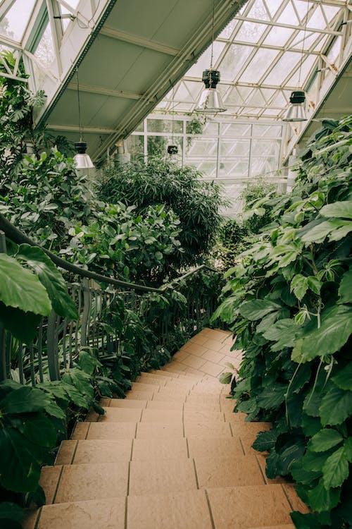 คลังภาพถ่ายฟรี ของ การเกษตร, การเจริญเติบโต, ดอกไม้