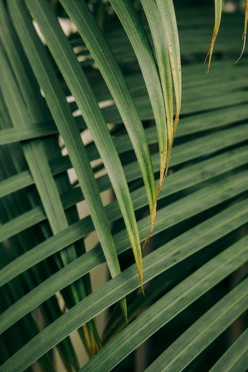 artificial grass palm desert