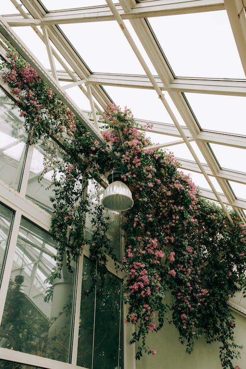 คลังภาพถ่ายฟรี ของ การตกแต่ง, ดอกไม้, ดอกไม้สวย