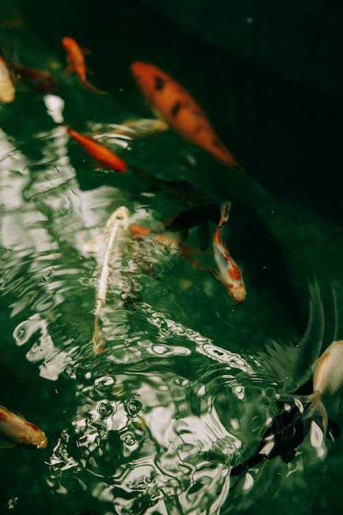 คลังภาพถ่ายฟรี ของ กลางแจ้ง, ถัง, ทะเล
