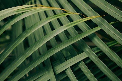คลังภาพถ่ายฟรี ของ กลางแจ้ง, การเจริญเติบโต, ต้นไม้