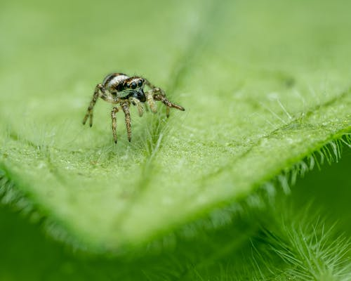 Jumping spider on green leaf in forest