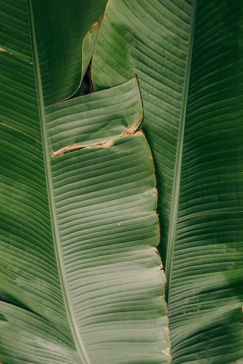Foto stok gratis 4k, daun besar, daun hijau gelap